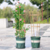 Climbing Plant Support Cage Garden Trellis Flowers Stand Rings Tomato Support Durable Climbing Vine Racks For Gardening Tools