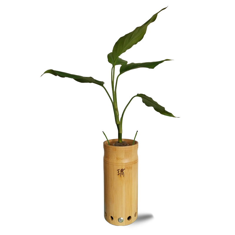 Green Plant Cultivation Office Home Air Purifier With Bluetooth Audio