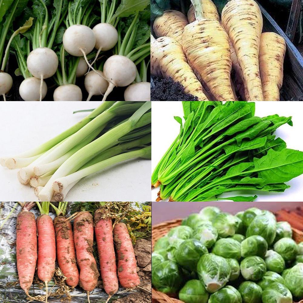 120pcs/set Vegetable Seeds Backyard Balcony Garden Carrot Garlic Seeds For Home Garden Bonsai