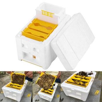 Caja de polinización para colmena de abejas, marcos de espuma, Kit de herramientas de apicultura, colmena para el hogar, herramientas para el apicultor