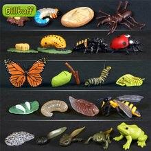 Figuras de animales de simulación para niños, juguetes de simulación de animales ABS, evolución de escenario, mariposa, Rana, Tortuga, pollo, ciclo de crecimiento de vida sólido