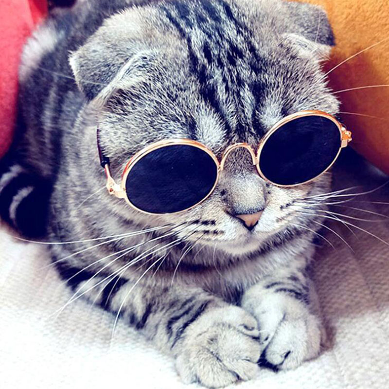 font b Pet b font Products Lovely Vintage Round Cat Sunglasses Reflection Eye wear glasses