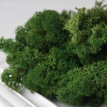 Sztuczna roślina życie wieczne mech kwiaty do składania materiał dla Mini ogród mikro krajobraz dekoracje ścienne do domu 10 g/p