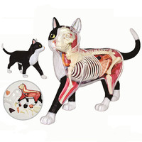 4d master puzzle Assembling toy Animal Biology organ anatomical model medical teaching model Black and white cat