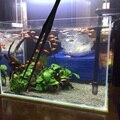 2 teile/satz Edelstahl Wasser Gras Clip 35 Cm Lange Pinzette Gerade Und Gebogene Aquarium Wartung Werkzeug Für Aquarium-in Reinigung von Werkzeugen aus Heim und Garten bei