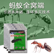 high-strength cockroach-killing ant domestic termite-killing agent insecticide liquid insect bug catcher roach killer(China)
