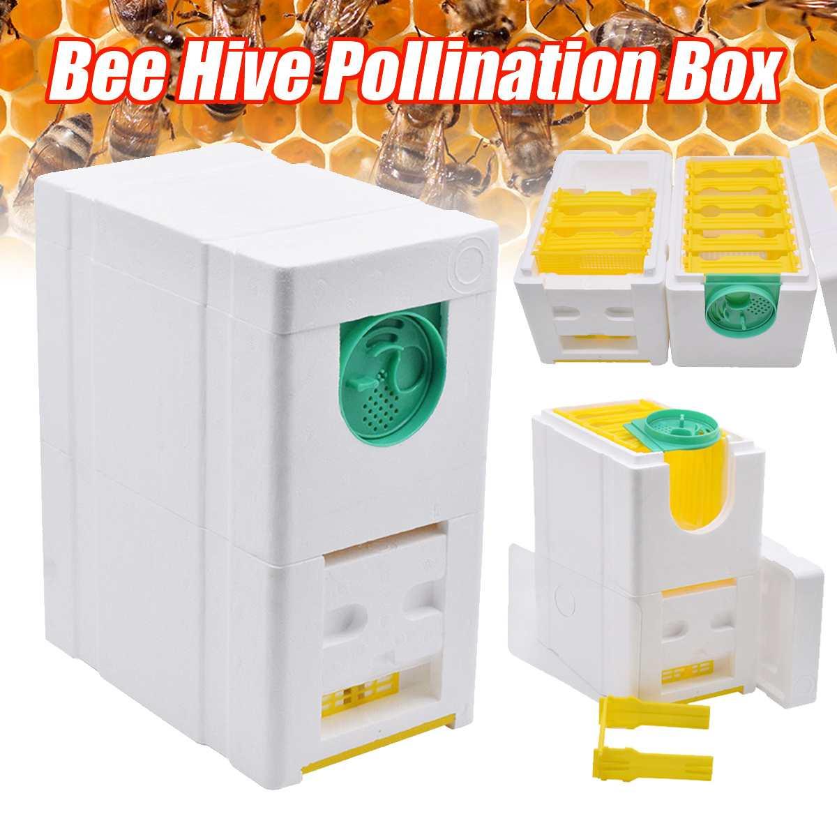Honey Beehive Frames Beekeeping Box Bee Hive King Pollination Box Bee Mating Copulation Box Beekeeping Equipment