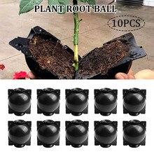 10 sztuk roślin zakorzenienia Ball hodowla Case dla roślina ogrodowa wysokiego ciśnienia propagacji Box Sapling akcesoria ogrodowe Dropshipping