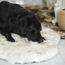 Fluffy Pet Dog Bed Mat Warm Soft Dog Rug Long Plush Dog Cat Sleeping Bed For Big Medium Small Puppys Winter Kennel