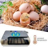 Kip Ei Incubator Automatische Broedmachine Machine 12 Eieren Hatchers Kip Automatische Eieren Incubator Vogel Kwartel Broedmachine Nieuwe