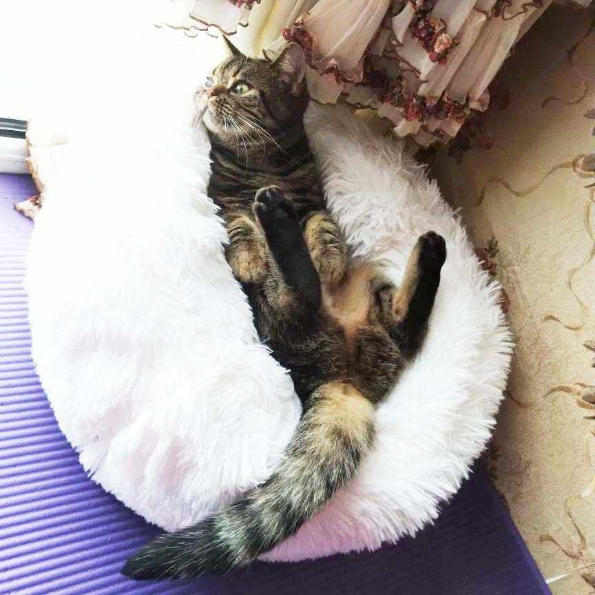 Yuvarlak kedi yatak ev yumuşak uzun peluş en iyi evcil köpek köpek yatağı sepeti evcil hayvan ürünleri yastık kedi evde beslenen hayvan yatak Mat kedi ev hayvanlar kanepe