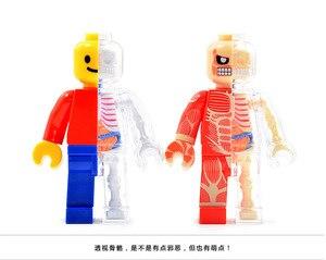 Image 5 - 4d Human Transparent Perspective Anatomical Skeleton Bone Model Puzzle Assembled Medical Toy