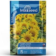 American Heirloom MARSEED Sunflower Flower  Seedsplants Seedling Garden Outdoor