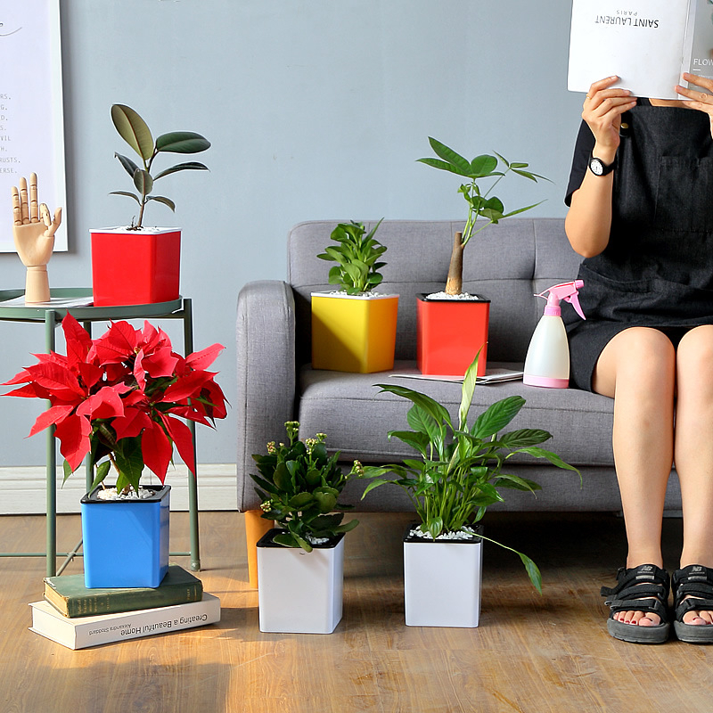 2019 New Automatic Water plastic flowerpots Desktop self absorbent basins Bonsai flowerpots Hydroponic for indoor Office Garden in Flower Pots Planters from Home Garden