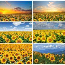 Photography Background Laeacco Sunset-Sunflower Scenery-Room Decro Field for Photo-Studio