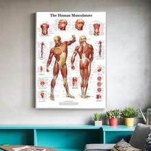 Lona pared arte 1 Panel Anatomia Humana Poster impreso en alta definición decoración del hogar Modular fotos para la sala de Marco