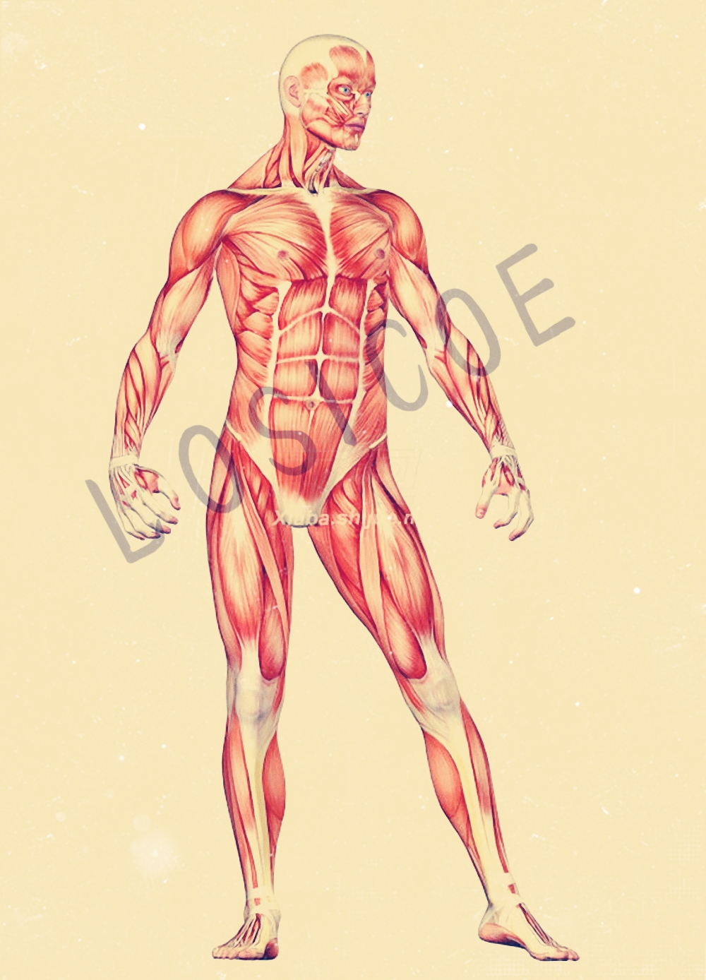 Anatomical Human Muscle Art Print Retro Kraft Paper Poster Hospital Clinic Gym Home Decor Wall Art Human Science Anatomy T5 Painting Calligraphy Aliexpress