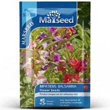 American Heirloom MARSEED Impatiens Balsamina Flower  Seedsplants Seedling Garden Outdoor