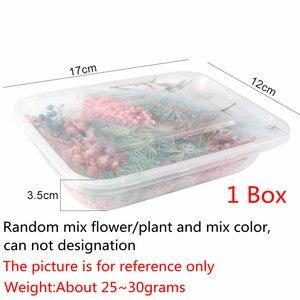 Image 3 - 1 Hộp Real Hoa Khô Cây Khô Cho Nến Thơm Nhựa Dính Mặt Dây Chuyền Vòng Cổ Trang Sức Làm Thủ Công Tự Làm Phụ Kiện