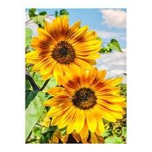 Słonecznik w słoneczniki diamentowe malowanie okrągłe pełne wiertło kwiatowy Nouveaute DIY mozaika haft 5D ściegu Home Decor