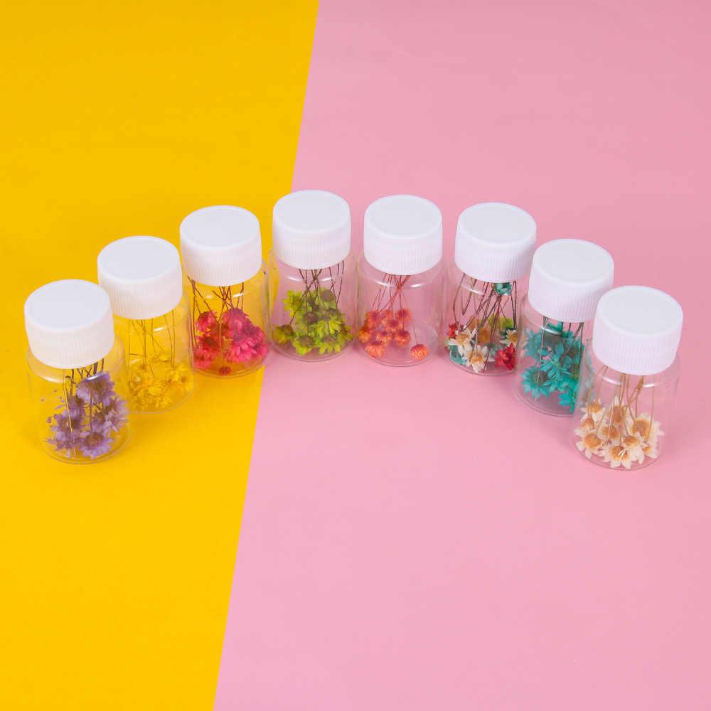 10 unids/caja estrella brasileña flor seca DIY resina epoxi artesanías de relleno hecho a mano flores secas piedra joyería hacer decoración de escritorio