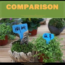 Colorful Plant Markers Garden Bonsai Succulent Seeding Tags Sign PVC Gardening Labels Stake on Soil Paint Stick Plastic Label 50pcs plastic plants tags nursery garden ring label pot marker stake hanging tags greenhouse bonsai collar tags