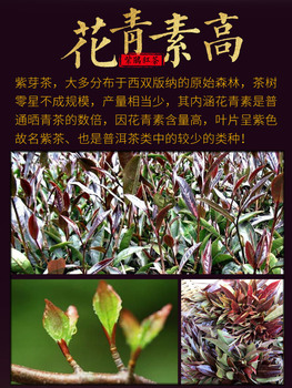 2019 Yunnna Zi Juan Hong Cha Purple Cuckoo Black Tea Rich In Anthocyanins for Anti-Aging and Warm Stomach 2