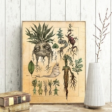 Paper Poster Painting-Wall-Picture Mandrake-Plant-Decor Classic Harry Kids Room Illustration