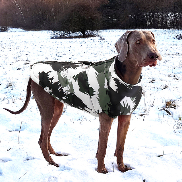 Fashion Winter Jacket 8