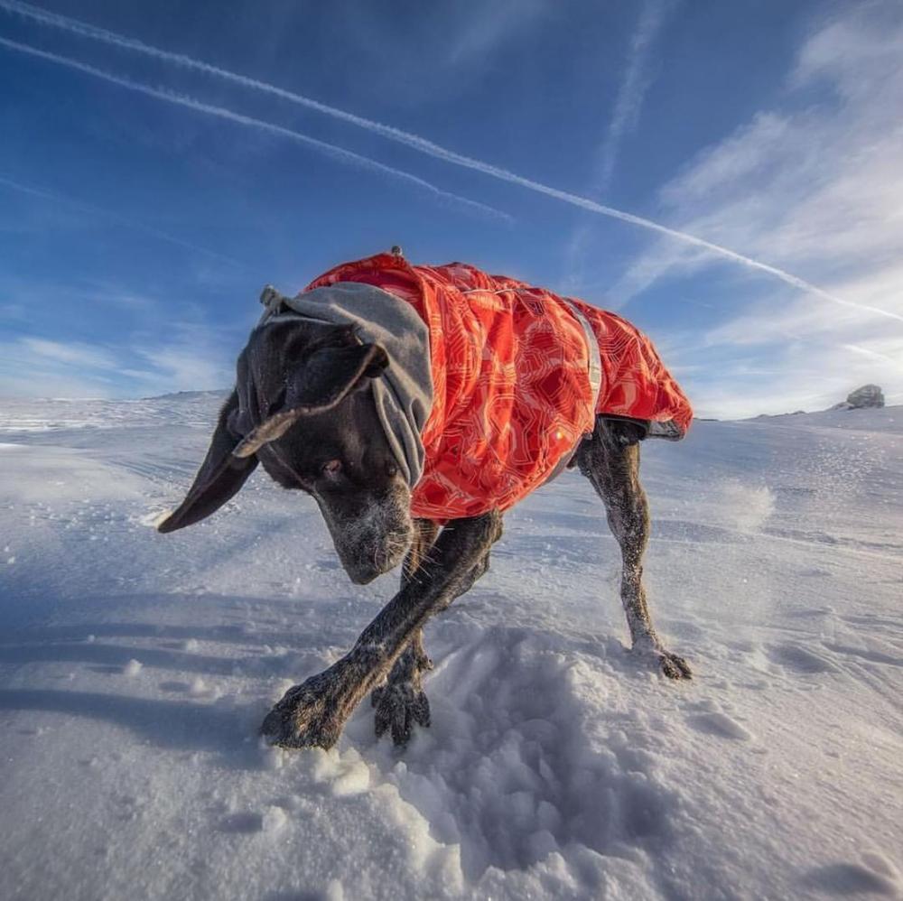 Одежда для собак, зимнее теплое ветрозащитное пальто, утепленная одежда для домашних животных, костюм для собак, комбинезон, куртка, лыжный костюм, товары для домашних животных, собак-2