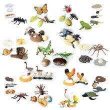 Simulação borboleta mantis abelha sapo ciclo de crescimento ciclo de vida animais modelo figuras de ação conjunto ensino brinquedos educativos para crianças