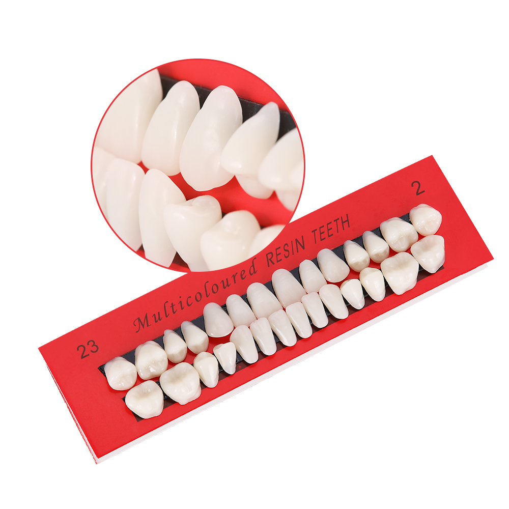 10 Set Pro Dental Material Plastic Teeth Teaching Model Dedicated Teeth Dental Material Useful Teeth Care Tool Full Denture A2