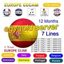 Egygold CCAM TV Receiver AV Cable line in europe cline egygold 7 lines Freesat ccam cline for DVB-S2 Gtmedia v8 nona V8 Honor