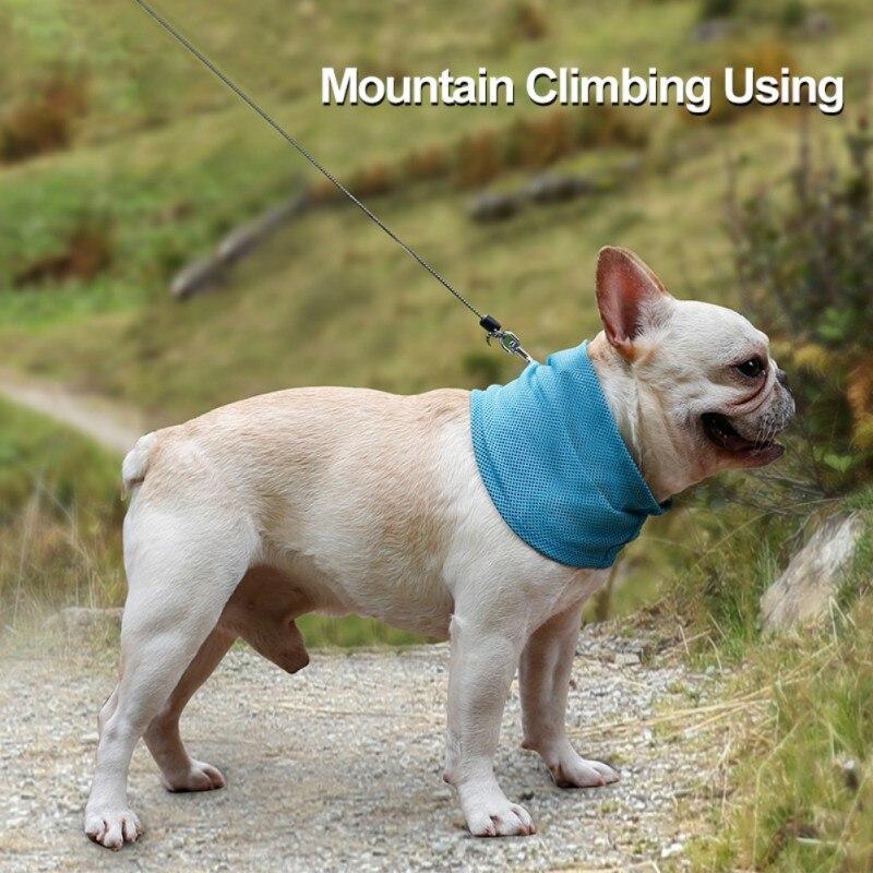 summer dog bandana