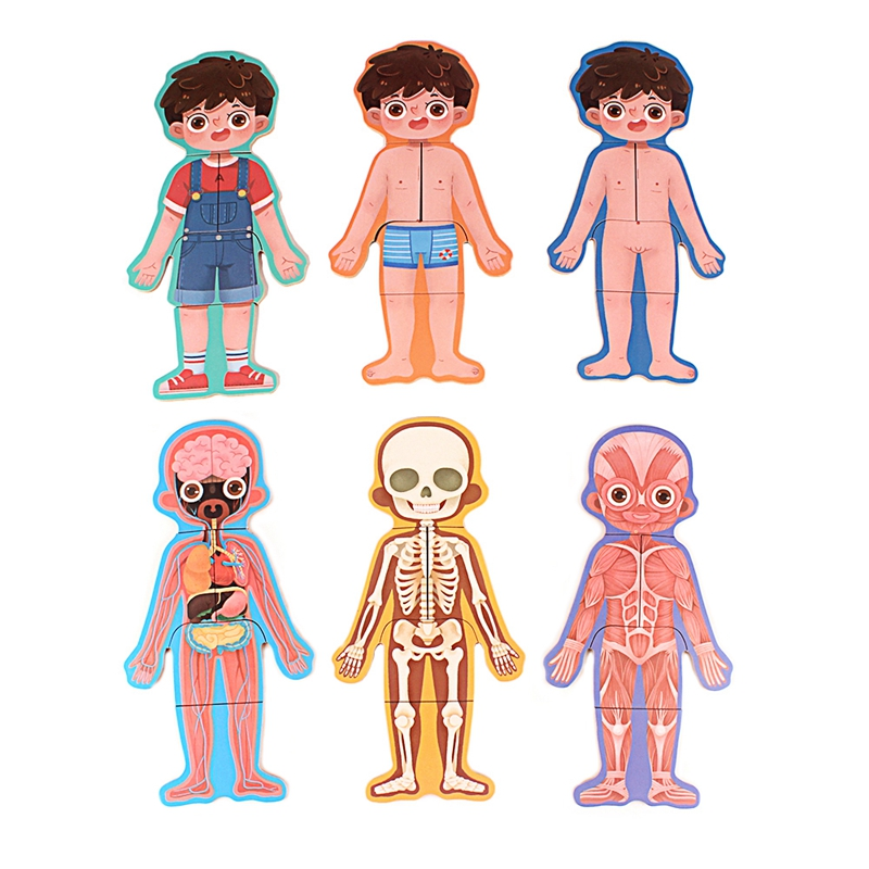 Kids Protection Education Puzzles Wooden Human Structural Bone English Commentary Baby Boys Girls Inaccessible Part Puzzle Toys