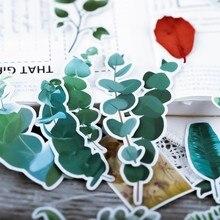 50 шт свежих зеленых листьев гербарий коллекция стикер эвкалипт цветок папоротника плоды растения наклейки для скрапбукинга Дневник планировщик