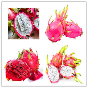 Tropical-Fruit-Food-Pot Bonsai Dragon Pitaya Juicy Garden Fruit-Tree-Plant Potted-Tree