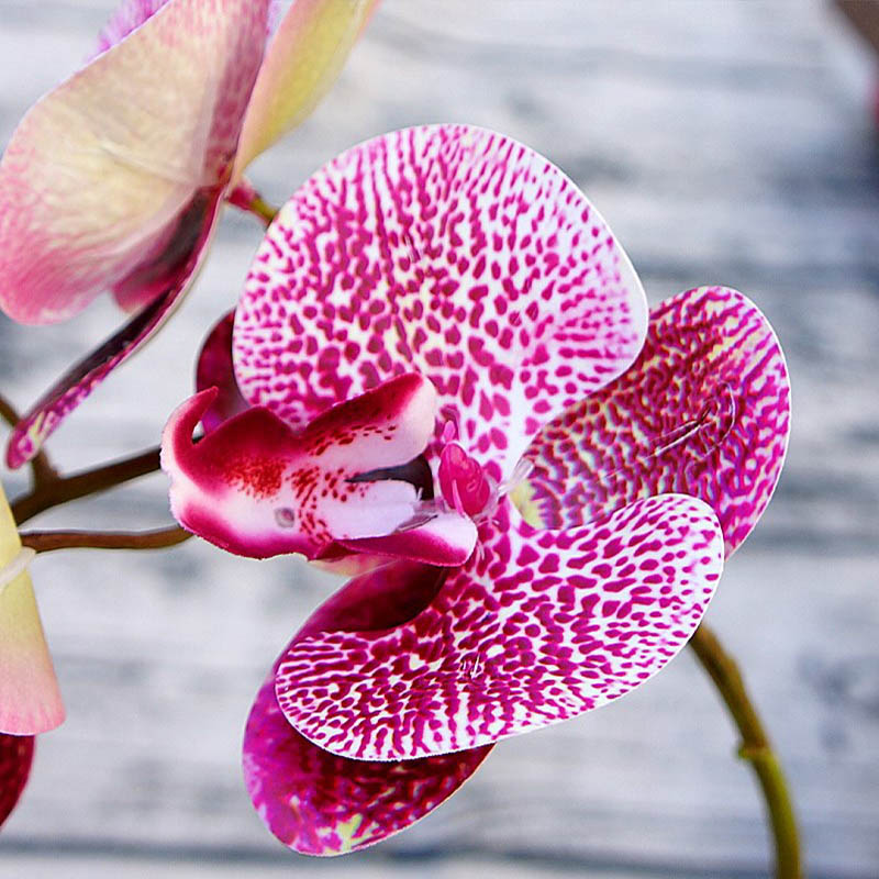 6 heads Simulation 3D Phalaenopsis silk orchid christmas decoration for new year home vases wedding artificial plants flowers