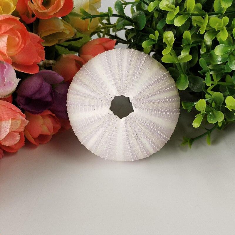 2PCS 3-6cm Natural Sea Urchin Purple Sea Urchins Handicraft Home Decoration Crafts Natural Crafts Wedding Sea Shells DIY