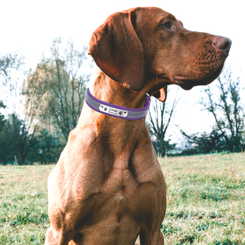 Personalized Dog Collar Leather Reflective Dogs Cat Collar 6