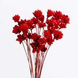 Маленькие цветы Бразилия натуральные сухоцветы букет украшения для дома рукодельные DIY настоящие цветы Цветочные оптом подставка под фото