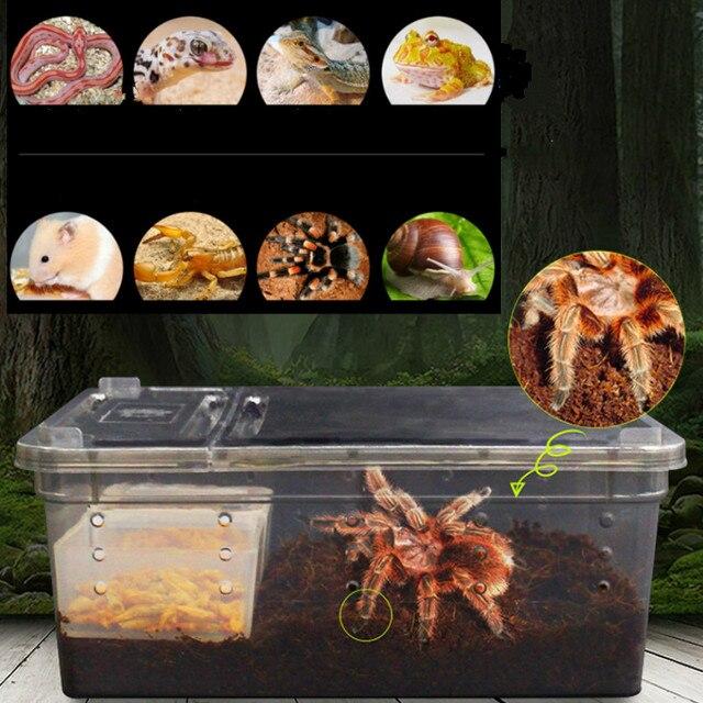 Transparent Terrarium For Small Amphibians & Reptiles  2