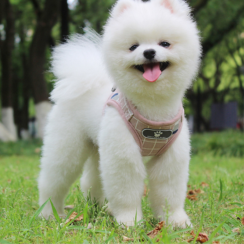 Small Medium Dog Harness Reflective Breathable Chest Strap Plaid Teddy Bichon Pet Clothes Supplies Dog Chain