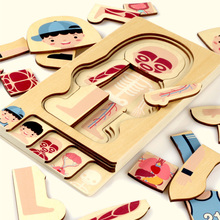 Educational Children Toys Wooden Human Body Puzzle Boys Girls Body Structure Children Puzzles Kids Toys puzzles alatoys bb216 play children educational busy board toys for boys girls lace maze toywood