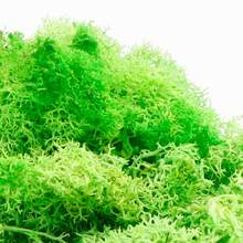 20g Colorful Natural Artificial Moss Plant DIY Dried Reindeer Moss 3D Decor Nail Tips DIY UV Resin Epoxy Filling Jewelry(China)