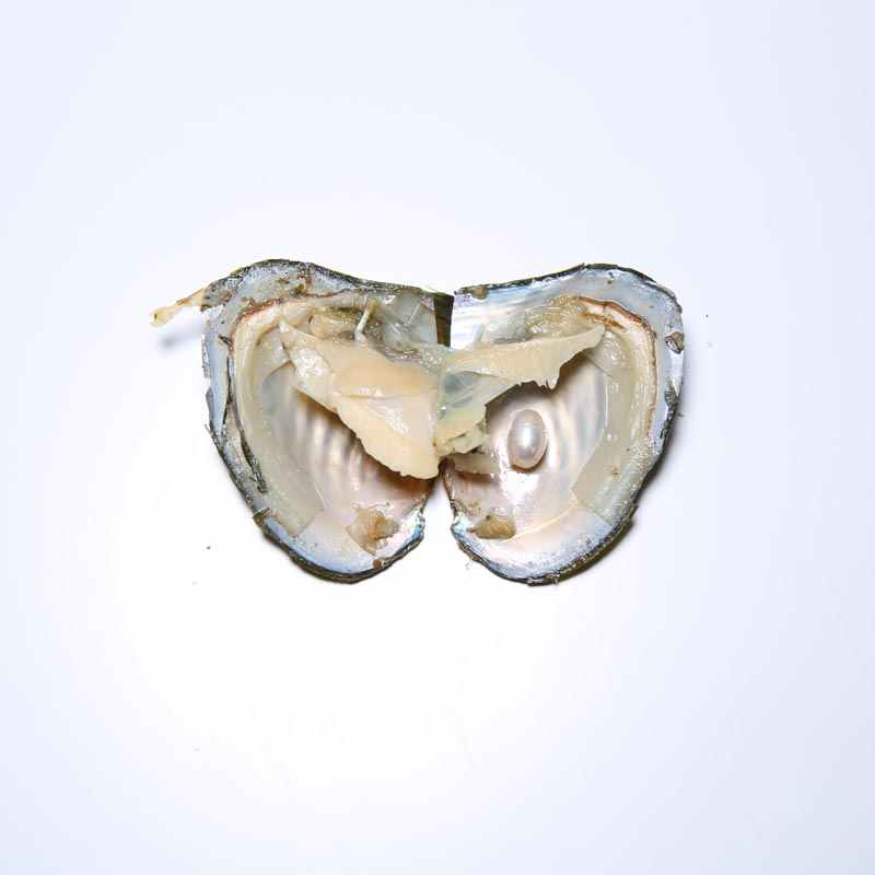 DMWB003 ウィ真珠ペンダントネックレス天然イガイビーズ母の日のギフト