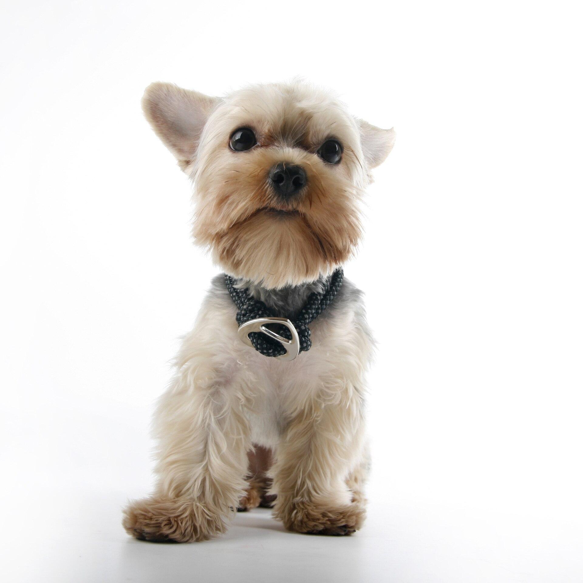 Doogee Pet Knot Heart DOG'S Head Hand Holding Rope Dog Neck Ring Labrador Schnauzer Handsome Bowtie