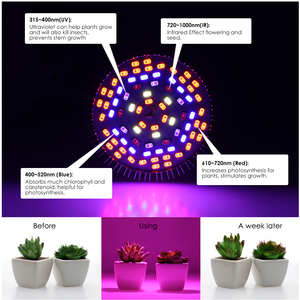 Image 4 - LED Grow Light Full Spectrum 10W 30W 50W 80W E27 LED Growing Bulb for Indoor Hydroponics Flowers Plants LED Growth Lamp