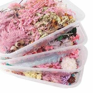 Image 2 - 1 Hộp Real Hoa Khô Cây Khô Cho Nến Thơm Nhựa Dính Mặt Dây Chuyền Vòng Cổ Trang Sức Làm Thủ Công Tự Làm Phụ Kiện