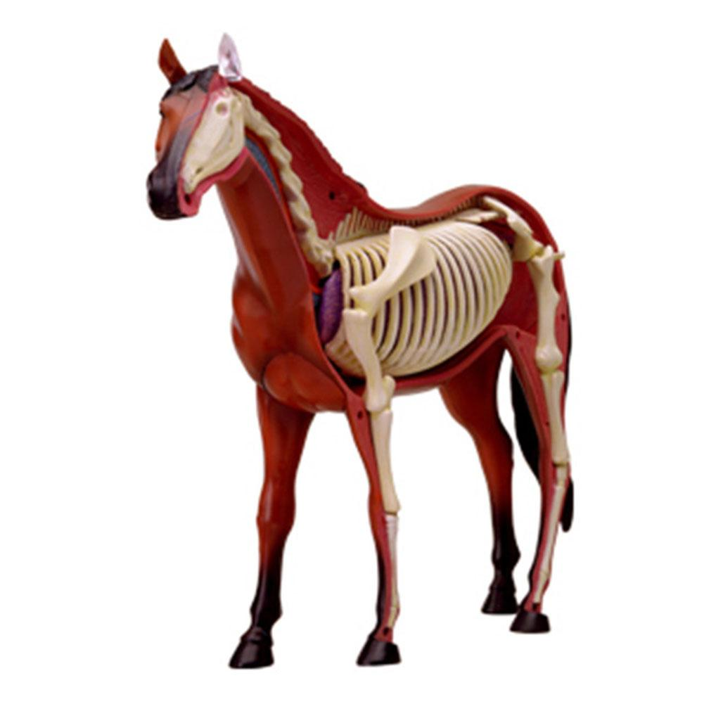 Assembled Horse Anatomy Model Medical Anatomic Animal Model Puzzels For Children Skeleton Educational Science Toys 31 Parts